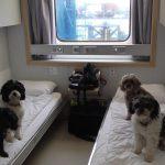 Comment aller en Corse avec un chien?